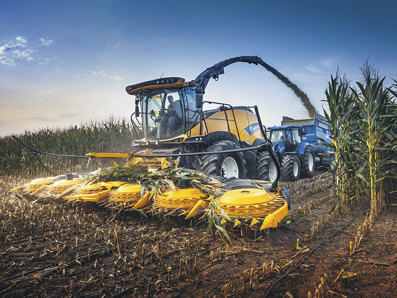 HEADS UP FOR THE MAIZE HARVEST
