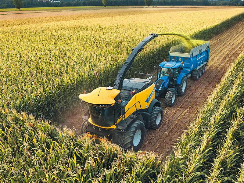 Maize harvest around the corner